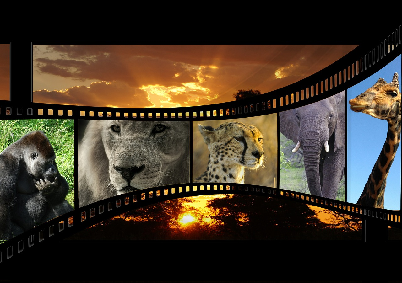 filmy-taśma-filmowa